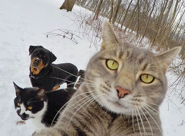 15 Funny Selfies From The Animal Kingdom That Will Make You Smile